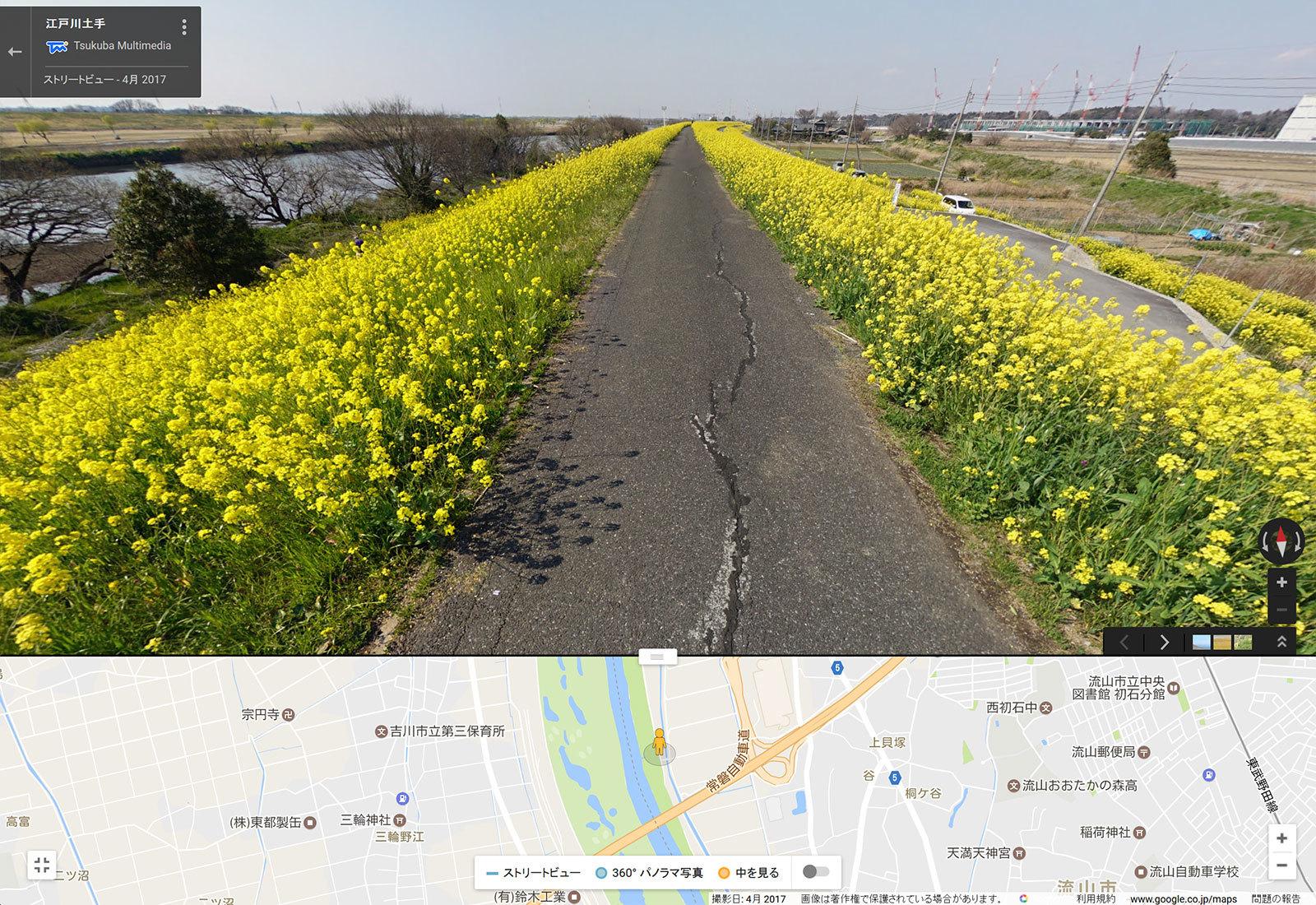 ストリートビュー写真(江戸川菜の花)